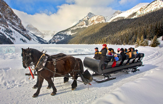 Enjoy a sleigh ride at Lake Louise, Banff National Park