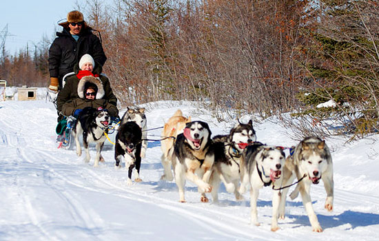 Huskies pull three people on a dogsledding tour