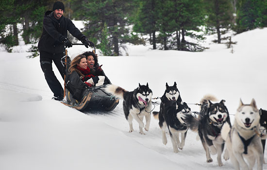 Dogsledding in the Canadian Rockies