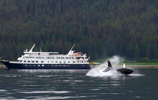 The Safari Endeavour passes by a breaching whale on an Alaskan cruise