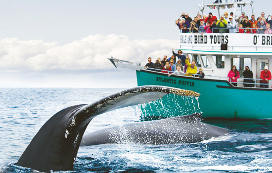 Whale watching in the Bay of Bulls, Newfoundland