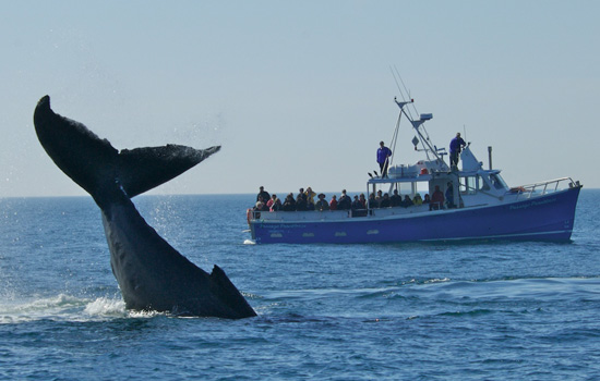 Digby Whale Watching Tours Reviews