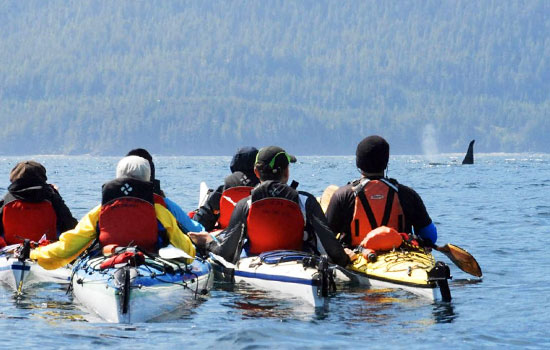 Kayaking with orca whales