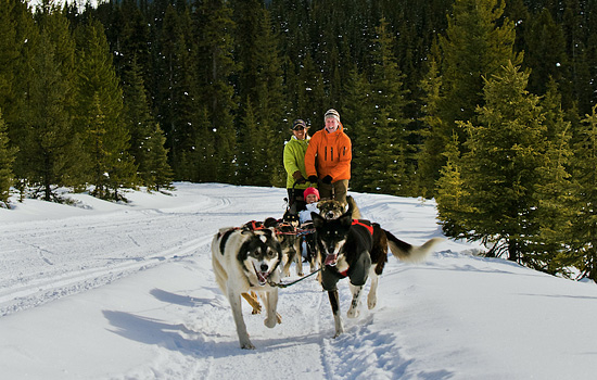 Winter dogsledding tour in the Canadian Rockies