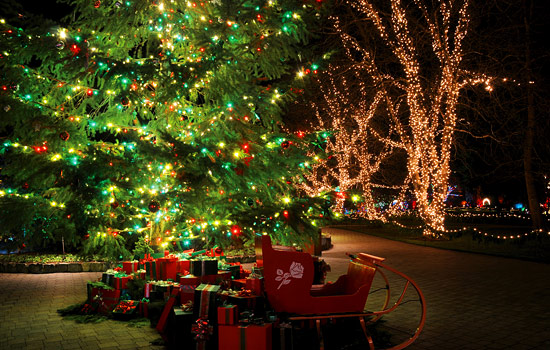 An ornamental sleigh and wrapped presents sit under a christmas tree in Butchart Gardens